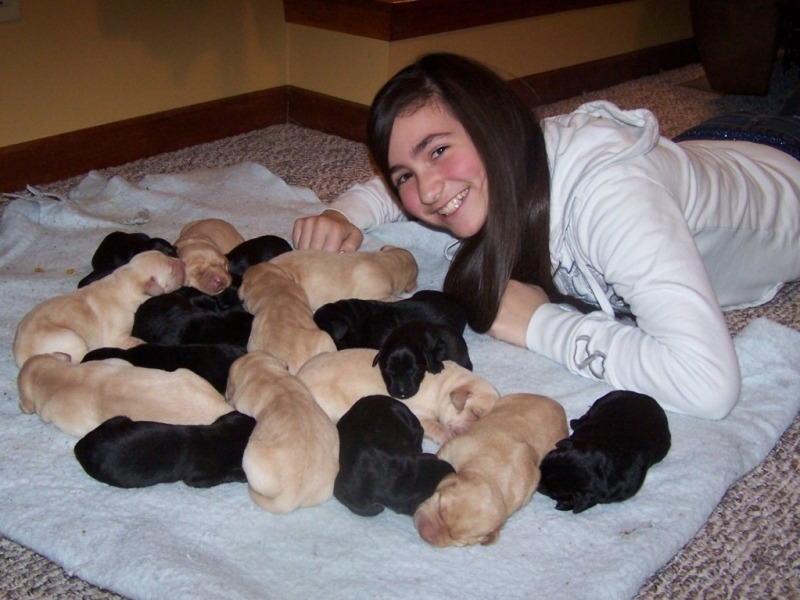 Eastin and Labrador Retriever Puppies for sale