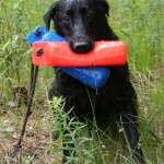 Labs-R-It Labrador Retriever Breeding and Training bumpers