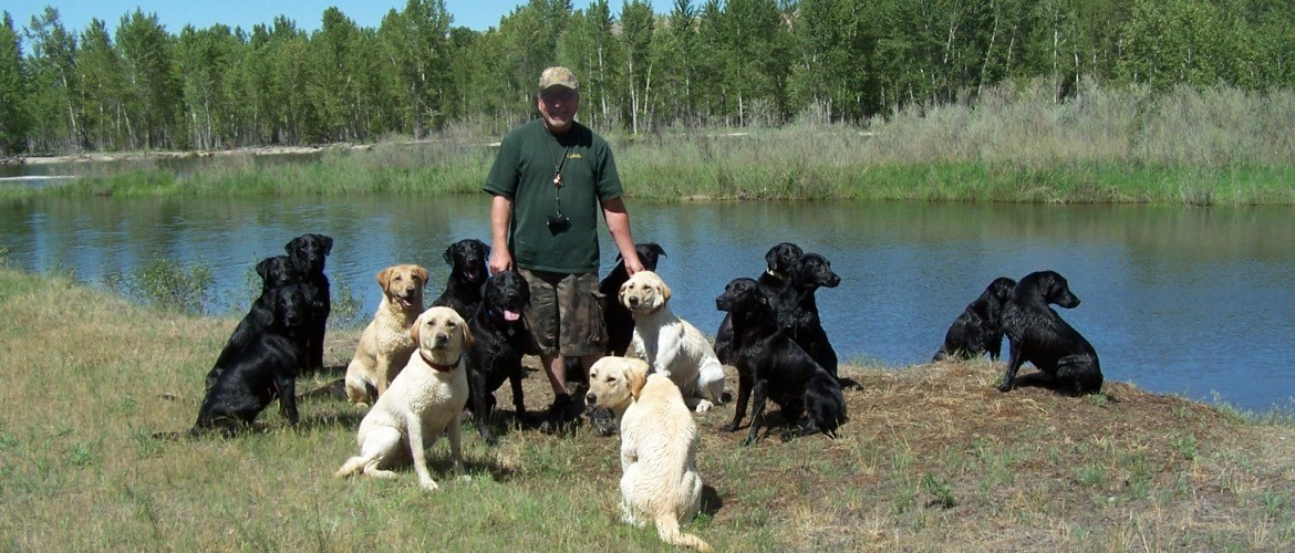 Labs-R-It Labrador Retriever Breeding and Training Our Dogs river fun